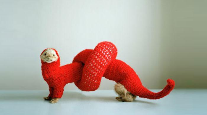 cute-funny-ferrets-21__700
