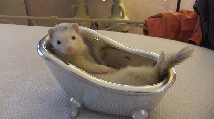 cute-funny-ferrets-23__700
