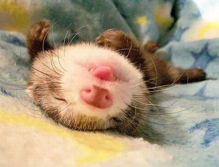 cute-funny-ferrets-24__700