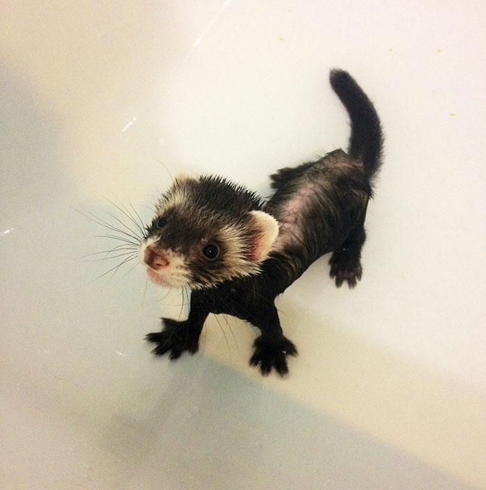 cute-funny-ferrets-8__700