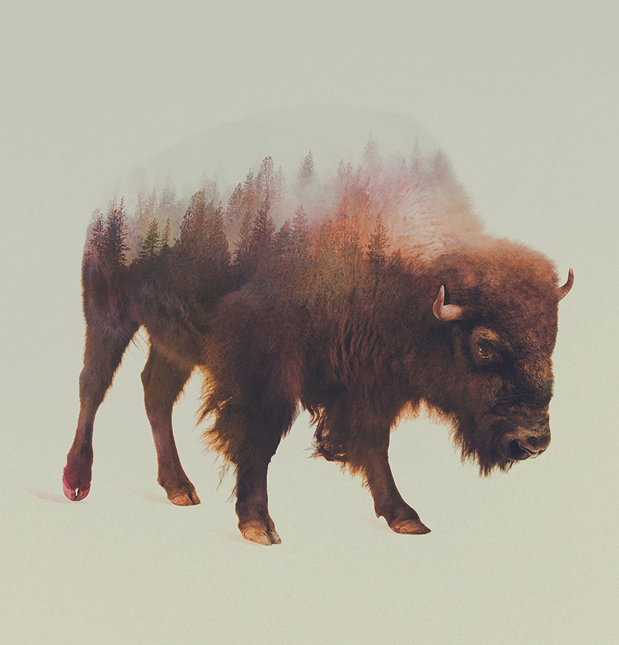 double-exposure-animal-photography-andreas-lie-10__880