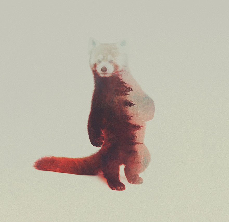 double-exposure-animal-photography-andreas-lie-16__880
