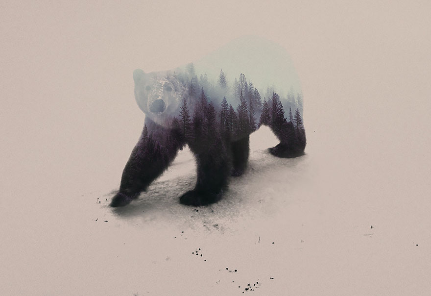 double-exposure-animal-photography-andreas-lie-19__880