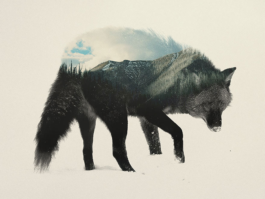 double-exposure-animal-photography-andreas-lie-1__880