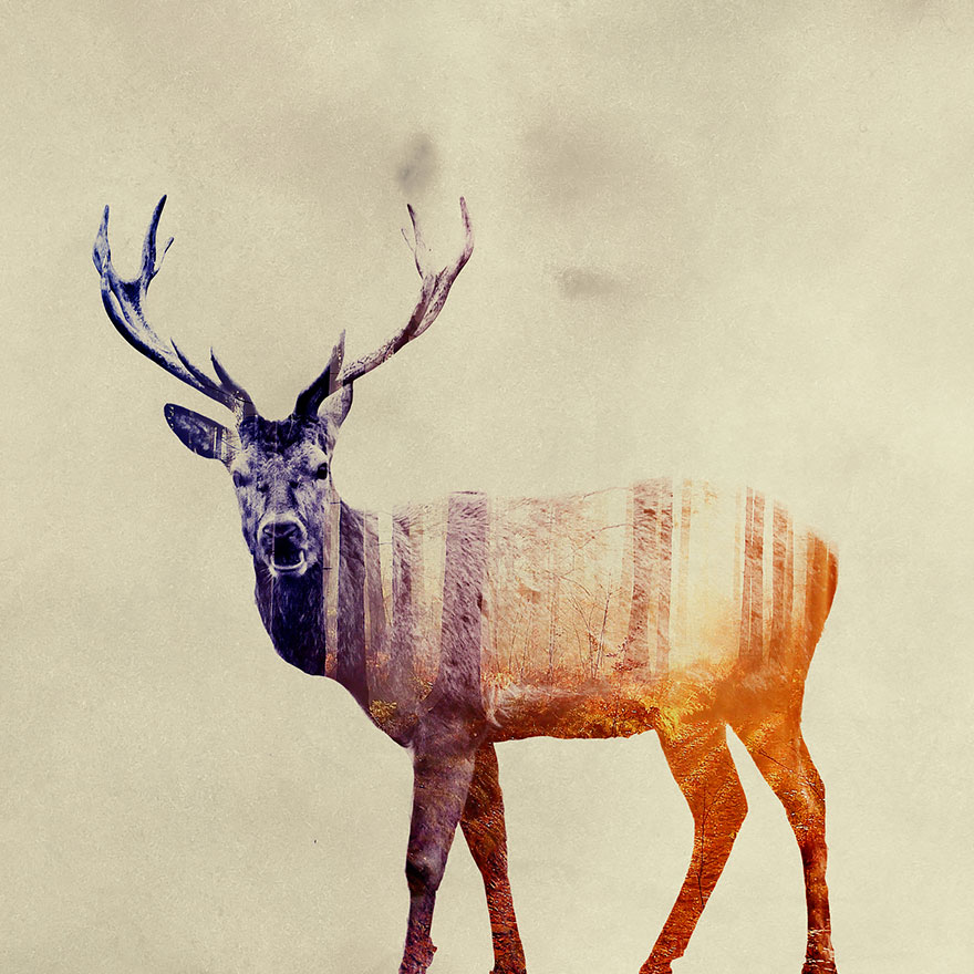 double-exposure-animal-photography-andreas-lie-21__880