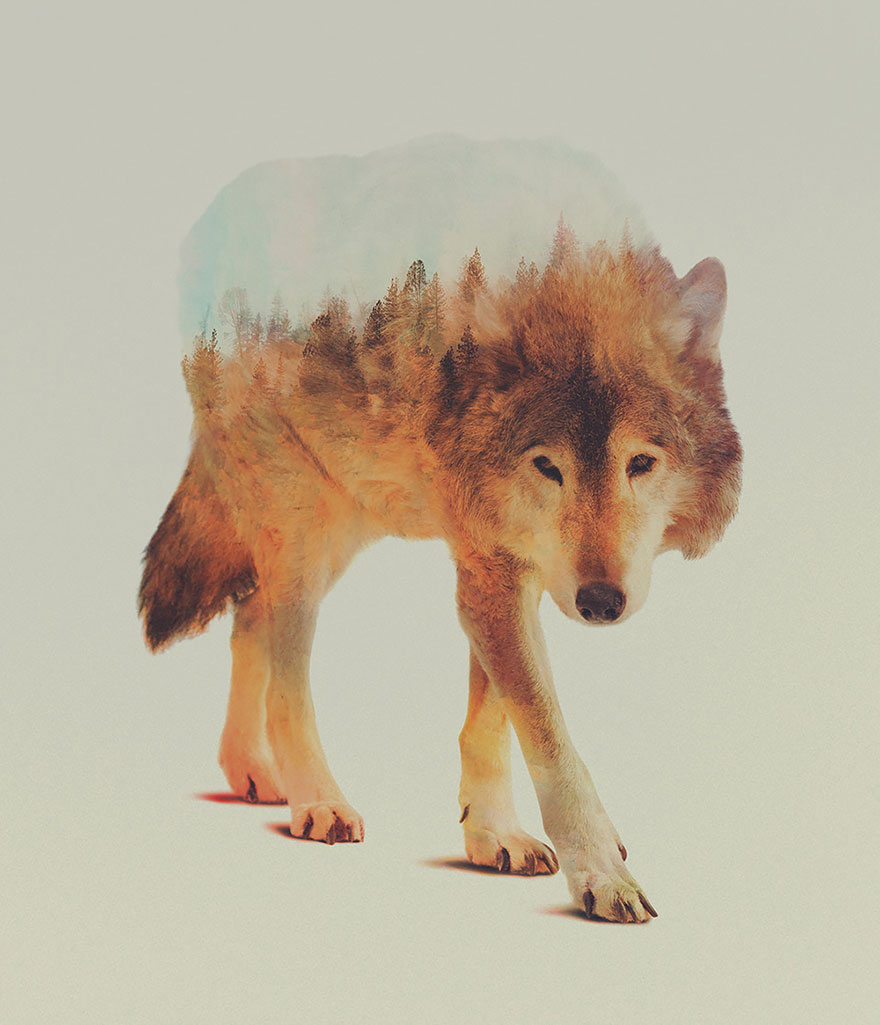 double-exposure-animal-photography-andreas-lie-2__880
