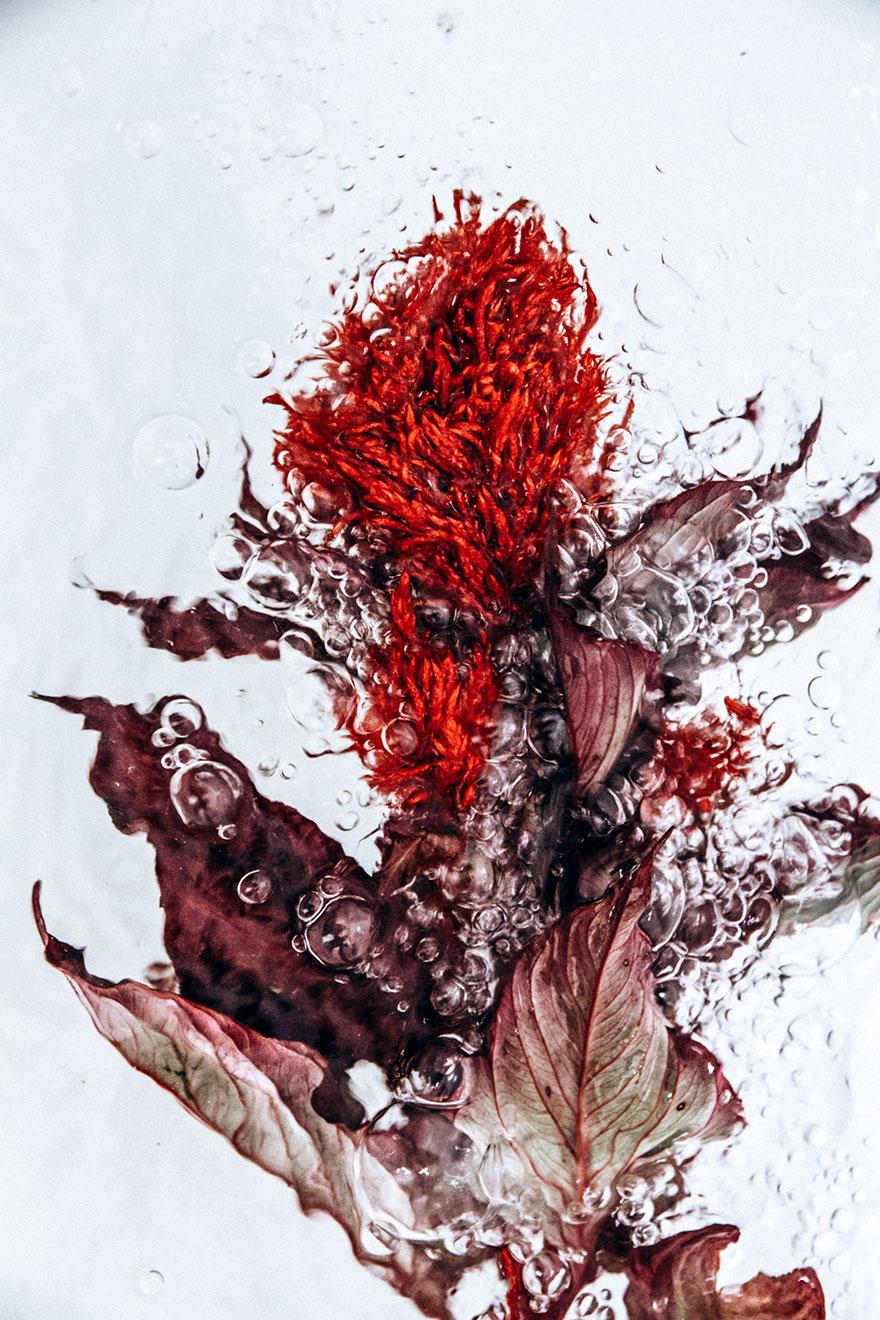 flowers-moving-water-flotsam-lisa-sorgini-5