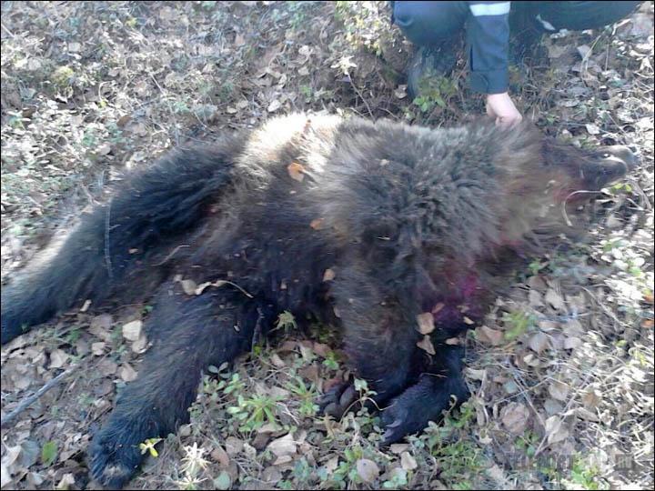 inside_dead_bear