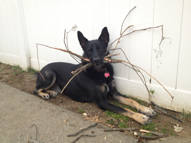 kutyabaki
