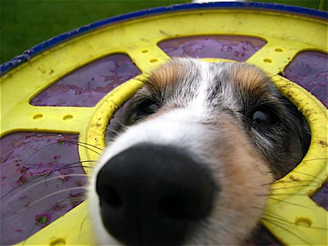 kutyabaki15