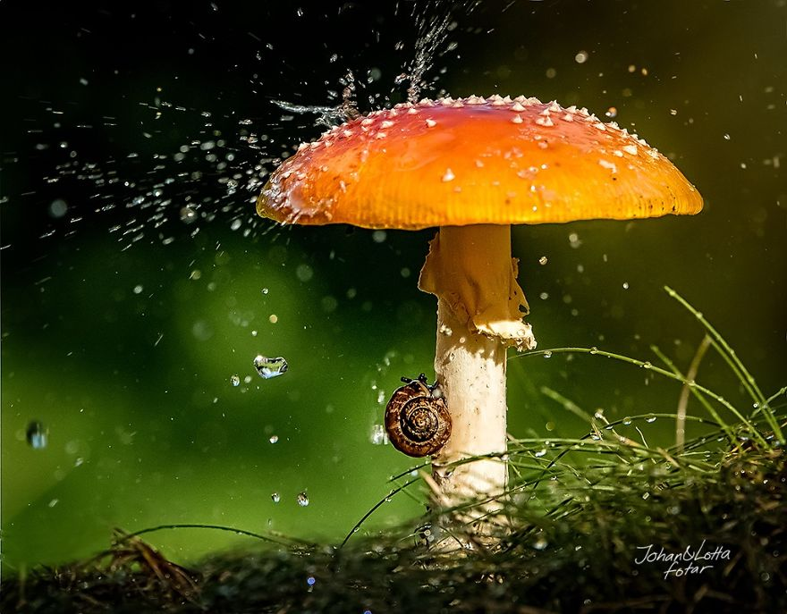 natural-umbrella-shelter-rain-animal-photography-1__880