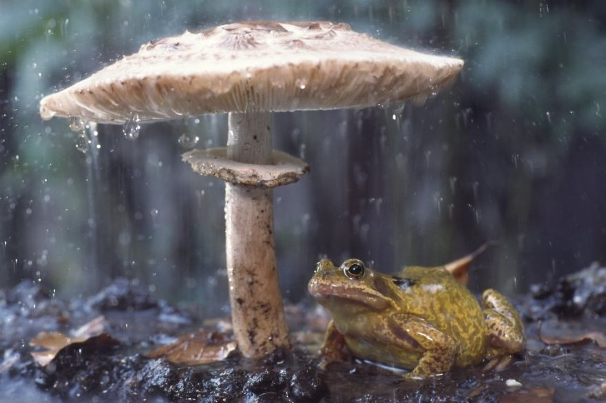 natural-umbrella-shelter-rain-animal-photography-22__880