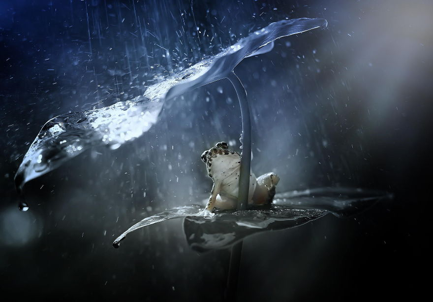 natural-umbrella-shelter-rain-animal-photography-2__880