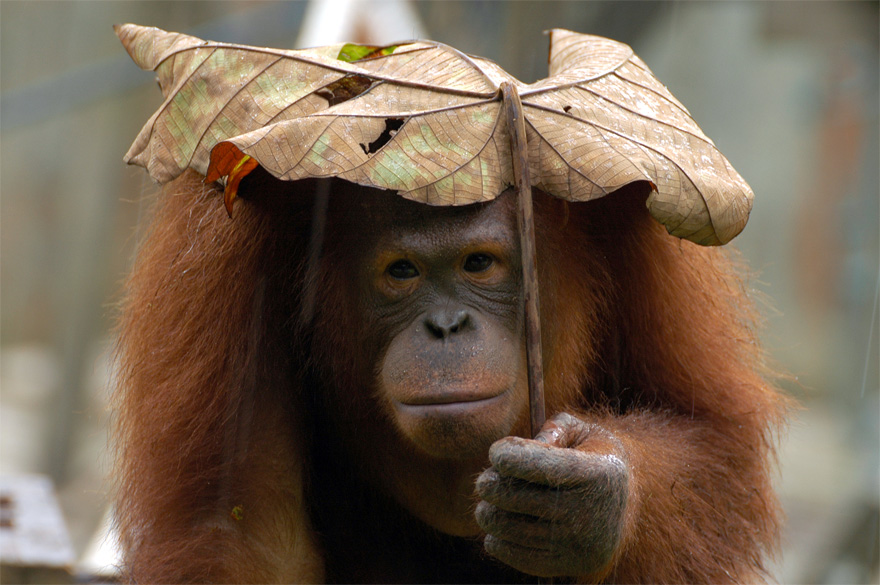 natural-umbrella-shelter-rain-animal-photography-3__880