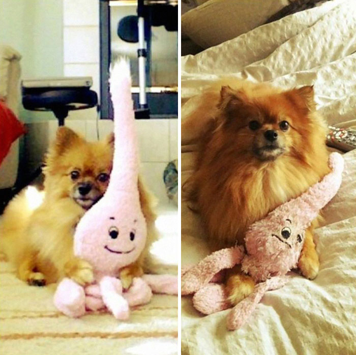 pets-growing-up-with-toys-24__700