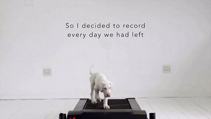 rescued-puppy-growing-up-dave-meinert-8
