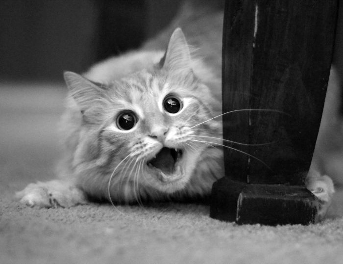 surprised-shocked-animals-funny-3__700