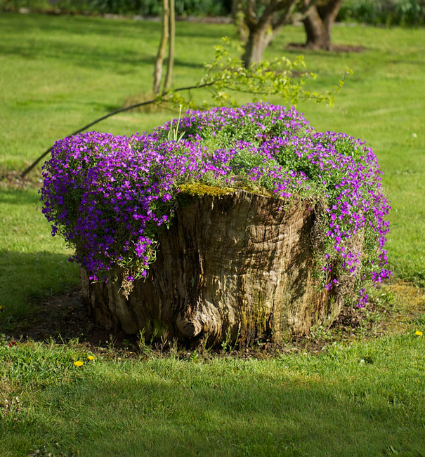 tree-stump-flower-garden-36__605