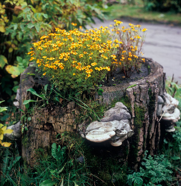 tree-stump-flower-garden-7__605