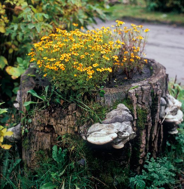 tree-stump-flower-garden-7__605
