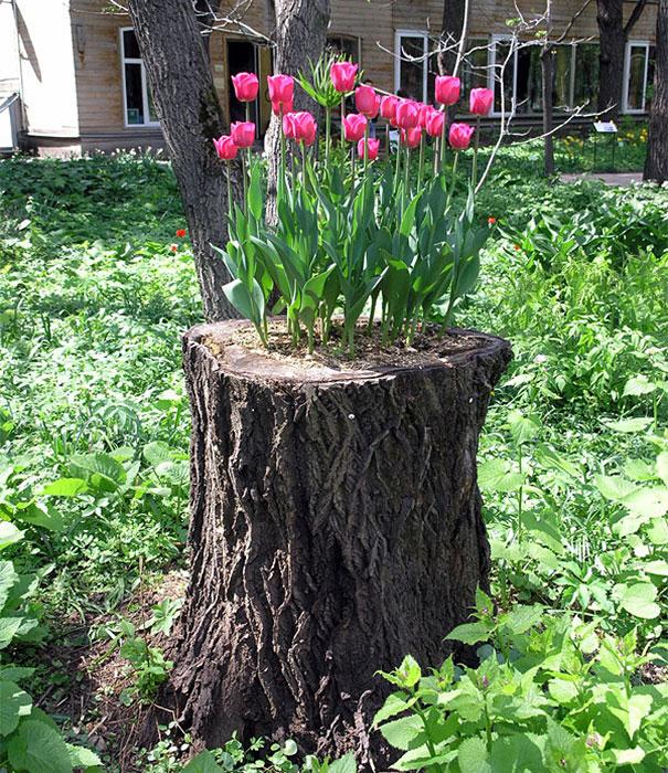 tree-stump-flower-garden-9__605