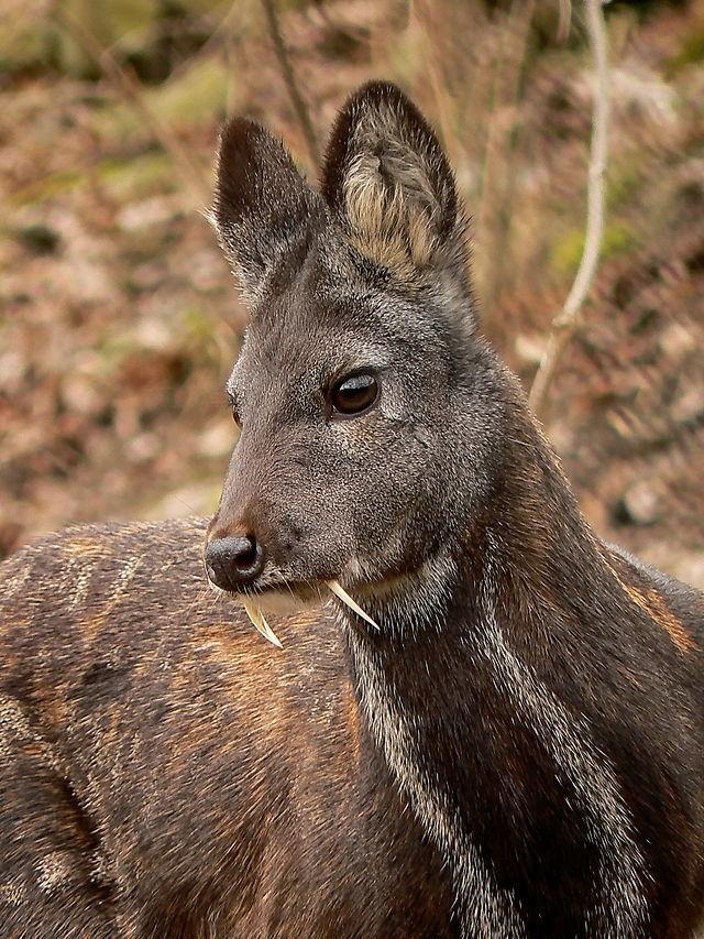 vampire-deer