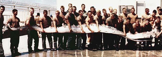 San Diego partjainál bukkantak erre a 7 méter hosszúságú szíjhal példányra 1996 szeptemberében