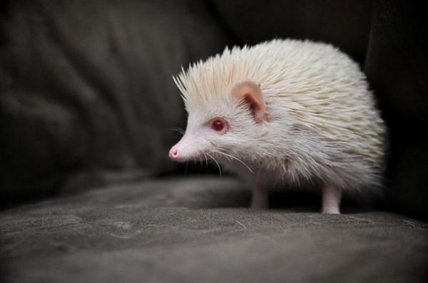albínóállatok1