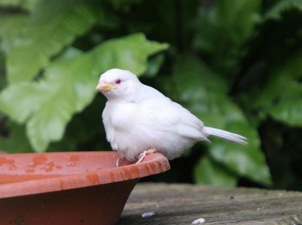 albínóállatok12