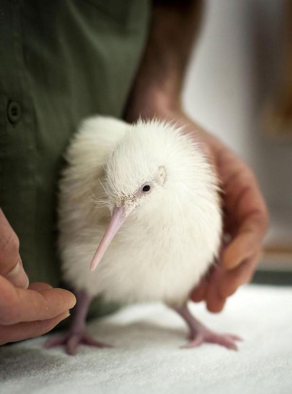 albínóállatok17