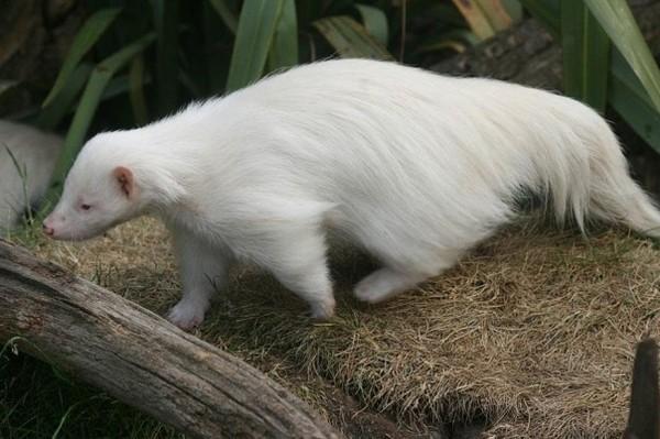 albínóállatok18