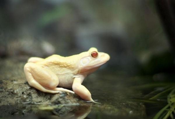 albínóállatok19
