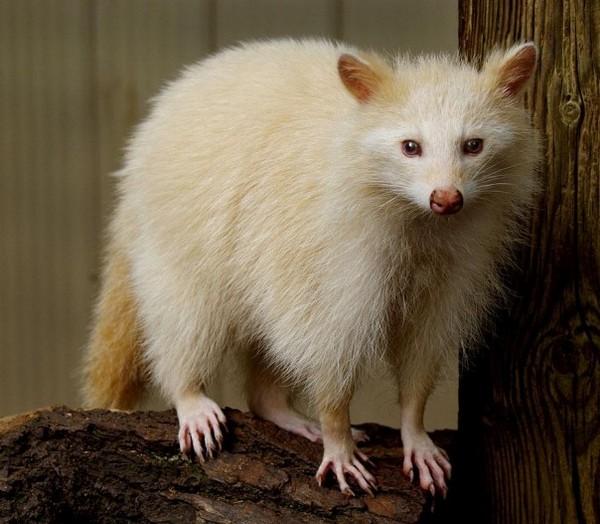 albínóállatok22