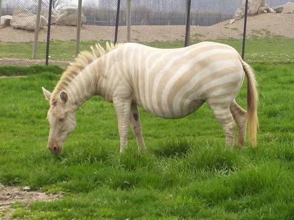 albínóállatok3