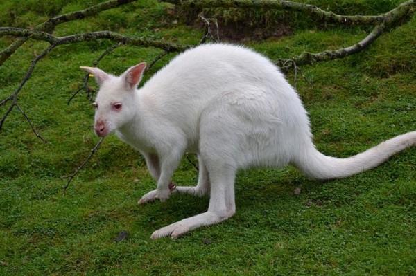albínóállatok5