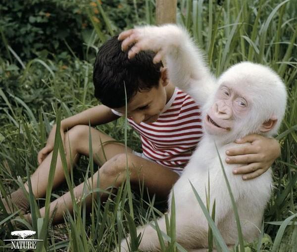 albínóállatok7