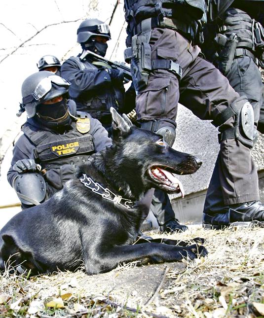 20111209  BLIKK TEK Bagira ember-elfogó kutya németjuhász. Fuszek Gábor munkatárs