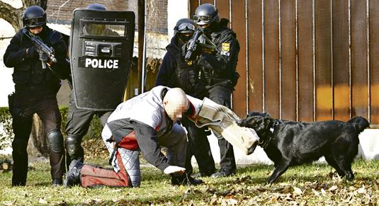 20111209  BLIKK TEK  gyakorlat Bagira ember-elfogó kutya németjuhász. ARCOT KITAKARNI !!!  Fuszek Gábor munkatárs