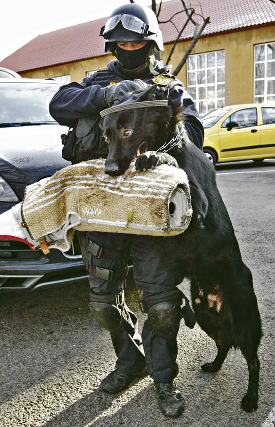 20111209  BLIKK TEK  gyakorlat Bagira ember-elfogó kutya németjuhász. Fuszek Gábor munkatárs