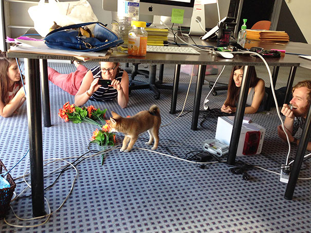 bring-puppy-to-work-1__605