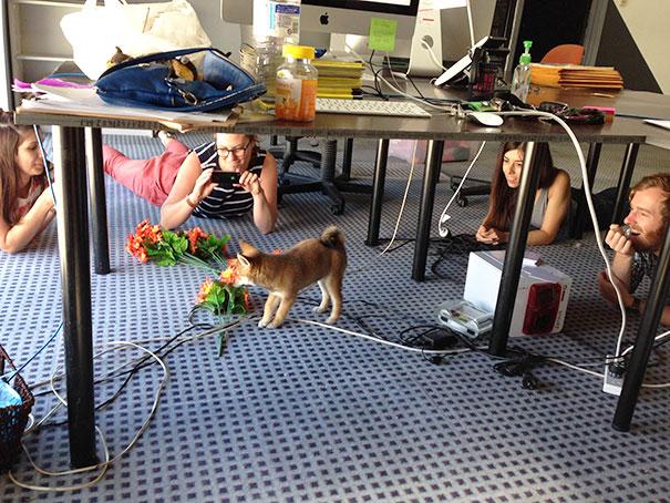 bring-puppy-to-work-1__605