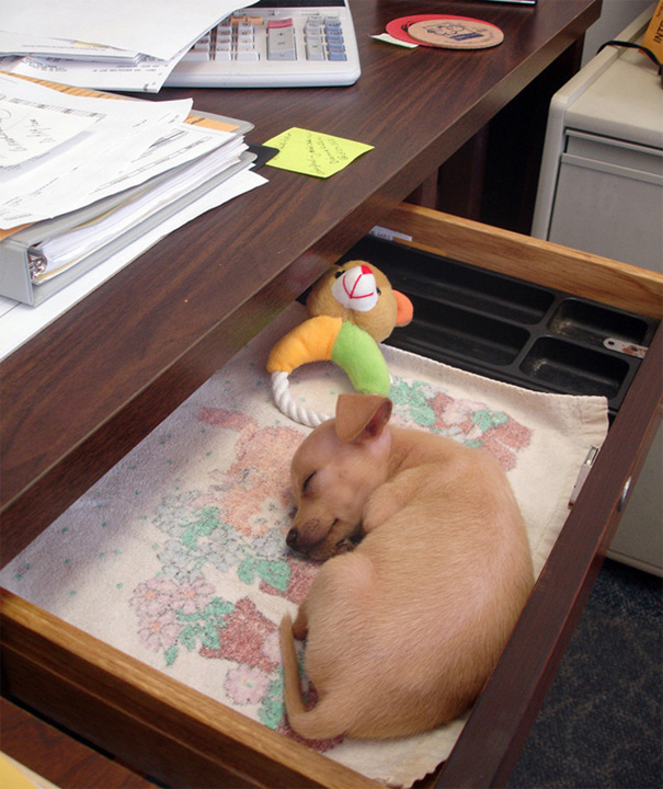bring-puppy-to-work-43__605
