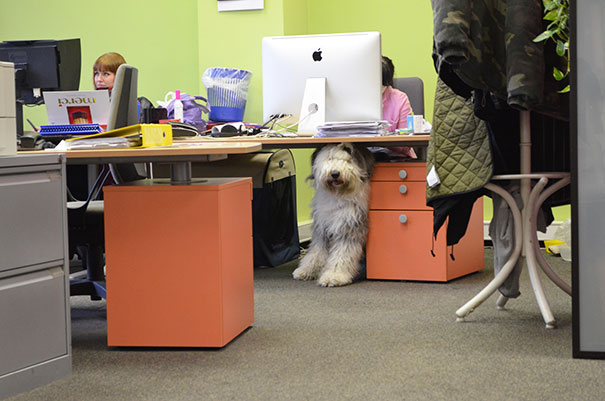 bring-puppy-to-work-9__605