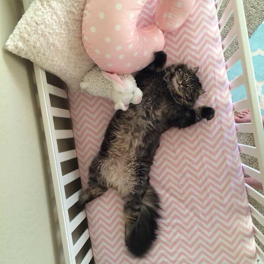 funny-cat-sleeps-baby-crib-finny-zoe-3
