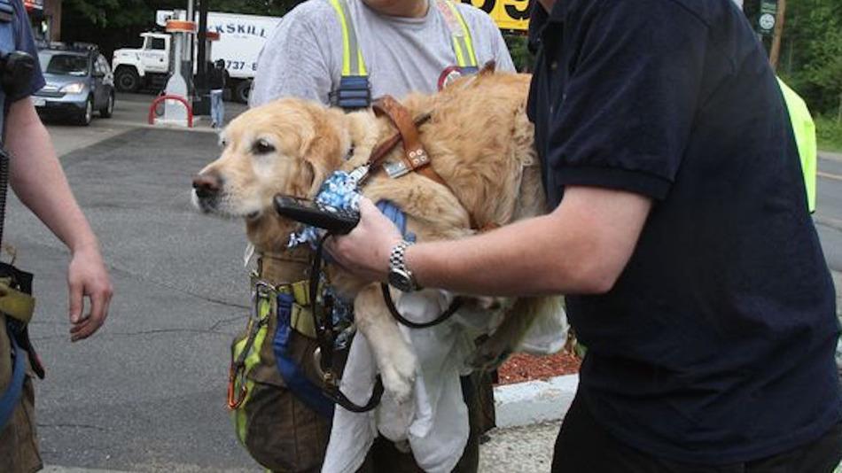 service-dog-