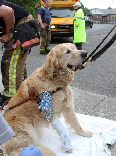 service-dog-IV