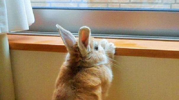short-people-problems-bunny-koron-japan-10