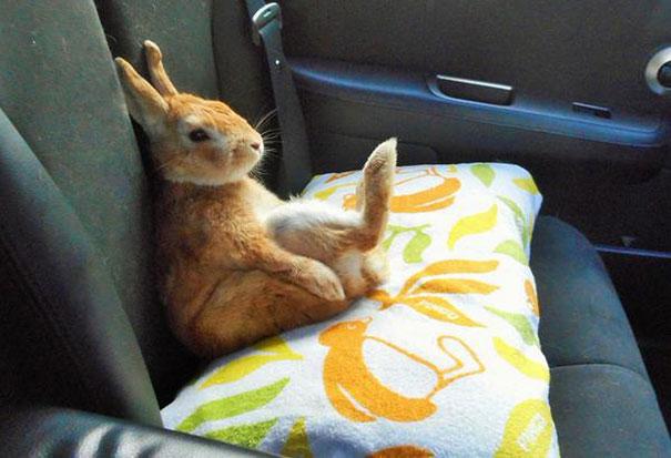 short-people-problems-bunny-koron-japan-13