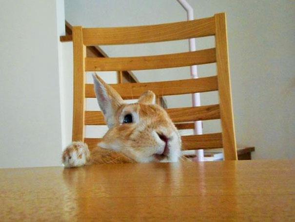 short-people-problems-bunny-koron-japan-2