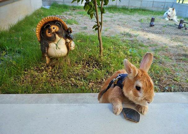 short-people-problems-bunny-koron-japan-4